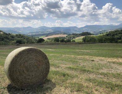 le-marche-veld-platteland-1400x1050